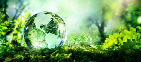 Profitable Sustainability Solutions for Supply Chains